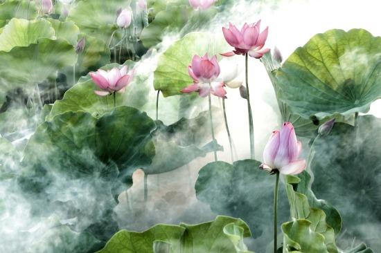 flower-2542231_960_720